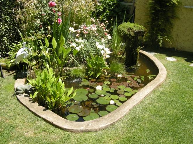 Plantas para los estanques florister a la mazeta zaragoza for Plantas para estanques