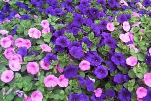 Beneficios plantas ornamentales floristerias Zaragoza