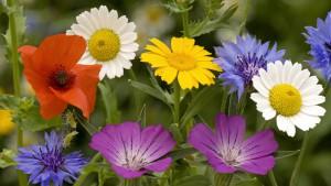 El lenguaje de las flores floristerias Zaragoza