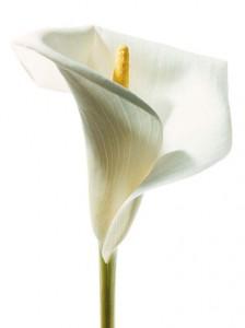 Las flores y la energia floristerias zaragoza