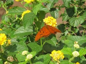 Que comen las mariposas floristerias Zaragoza