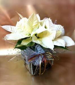 Que plantas regalar en Navidad floristerias Zaragoza
