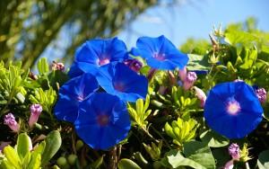 Campanula-floristerias-zaragoza
