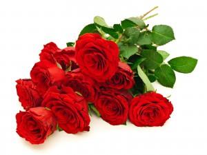 Las rosas tienen espinas floristerias Zaragoza