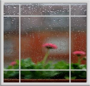 lluvia plantas de interior floristerias Zaragoza