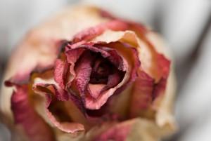 Como-secar-nuestras-flores-floristerias-Zaragoza