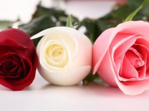 Las flores perfectas floristerias Zaragoza