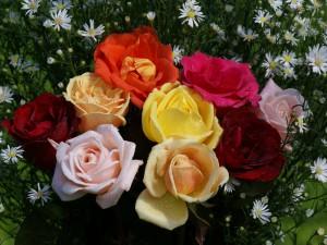 rosas-duran-mas-floristerias-Zaragoza