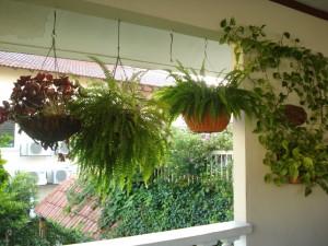 Consejos para cuidar plantas colgantes floristerias Zaragoza