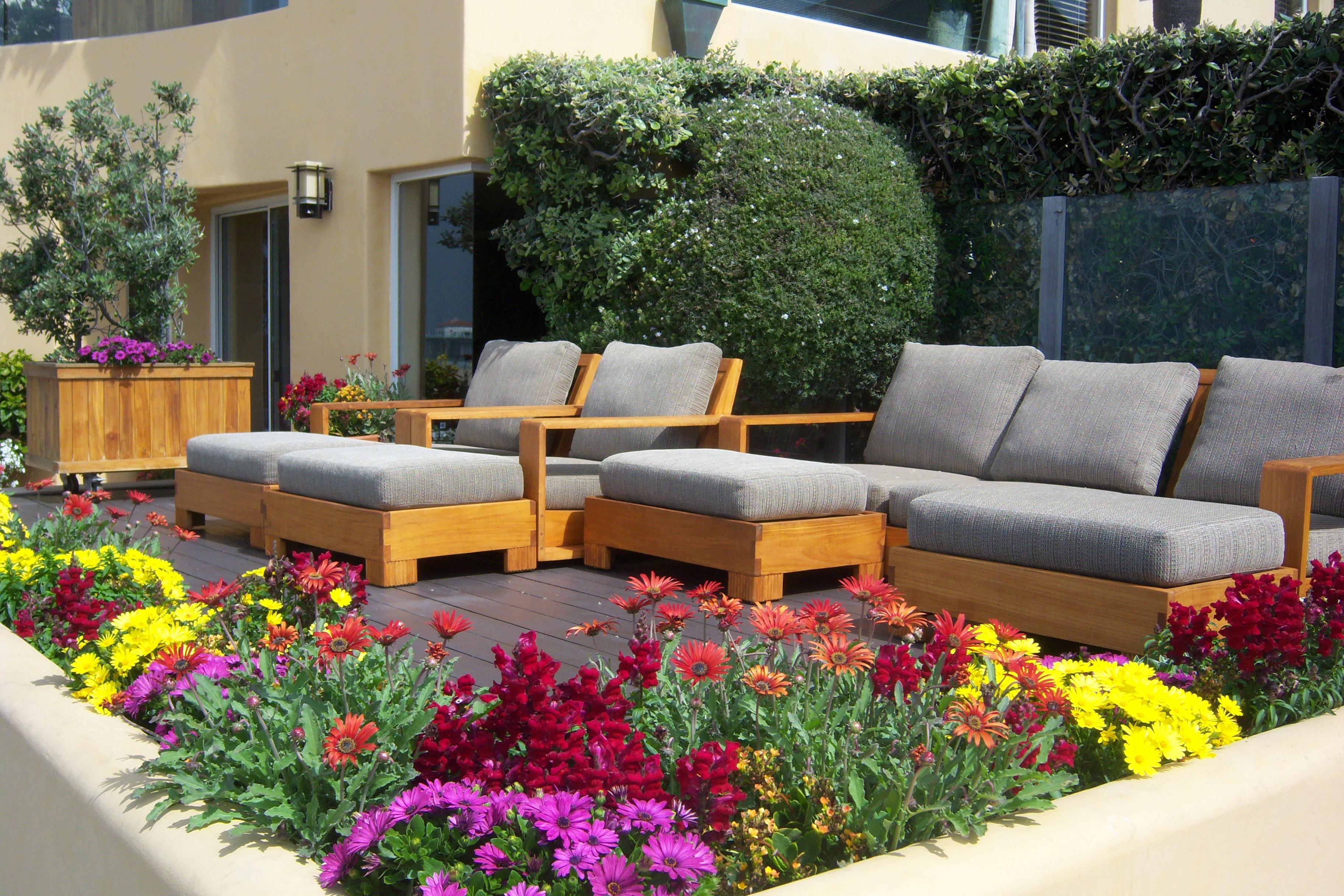 qu planto en mi terraza en la primavera u floristera la mazeta