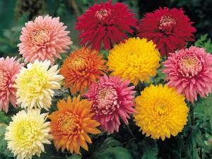 Flores para el Dia Todos Santos floristerias Zaragoza