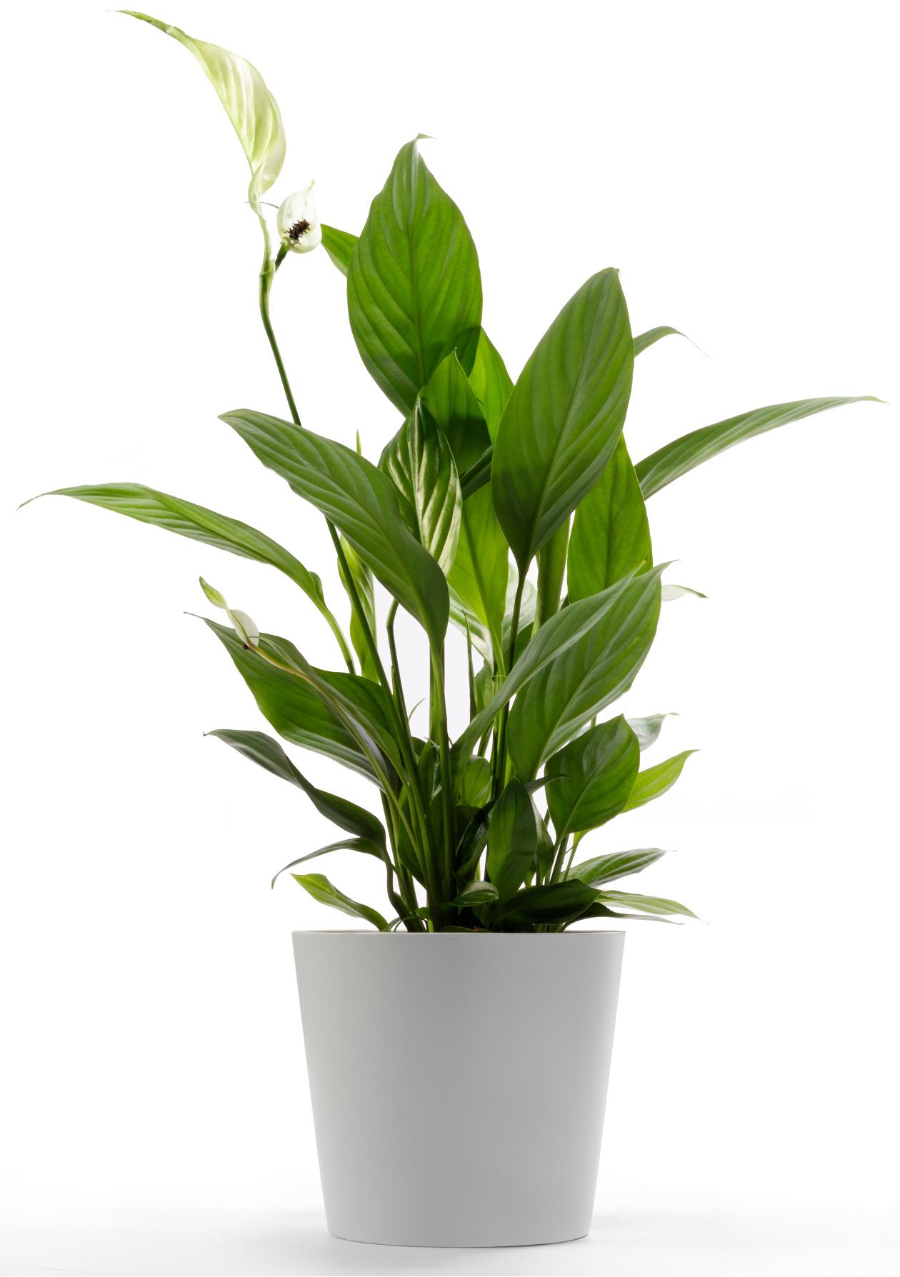 Plantas de interior resistentes florister as en zaragoza for Plantas para interiores oscuros