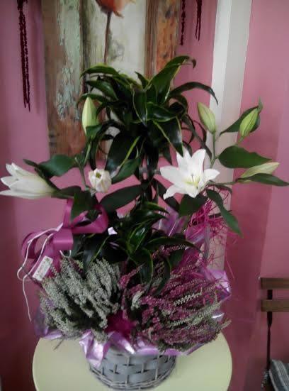 centro flores jubilacion