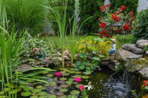 jardin acuatico floristerias Zaragoza