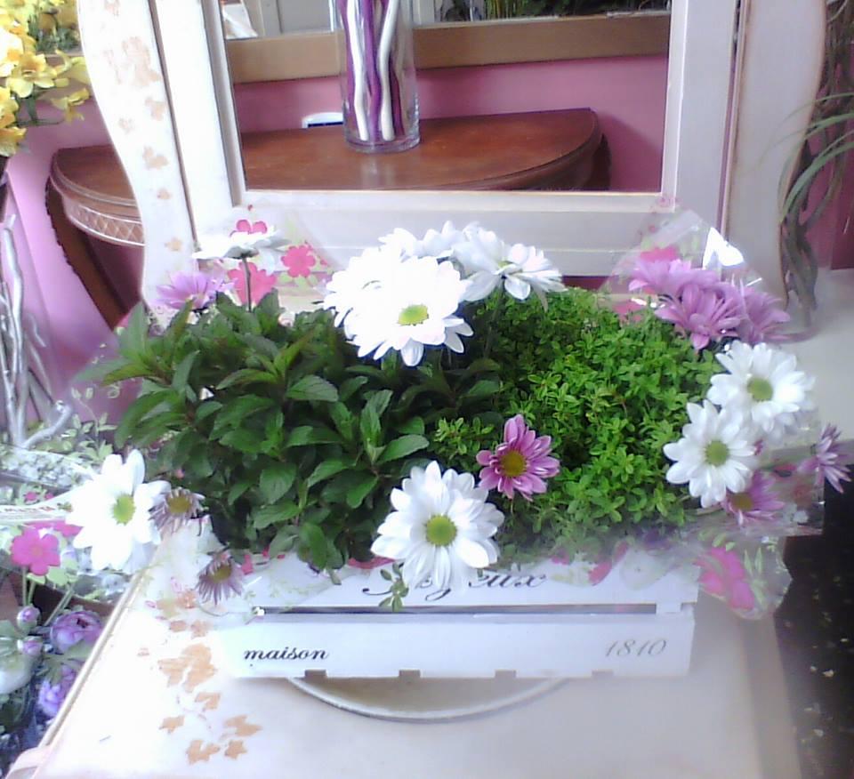 plantas aromaticas margaritas 1