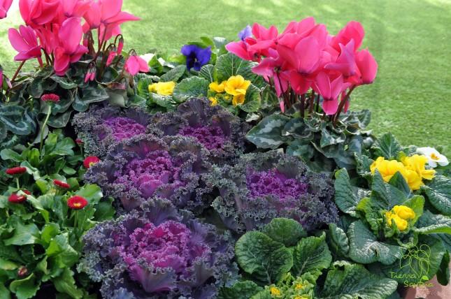 Plantas de temporada oto o invierno florister a la for Plantas de invierno exterior