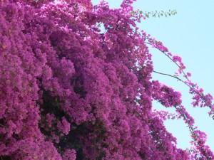 Plantas trepadoras para jardin floristerias Zaragoza
