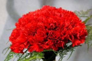 fiestas-del-pilar-floristerias-zaragoza