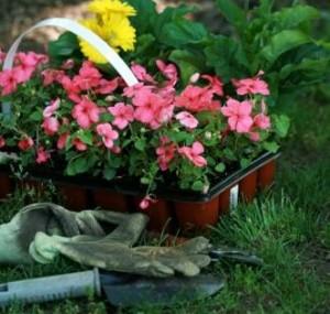 cuidados del jardin en primavera floristerias zaragoza