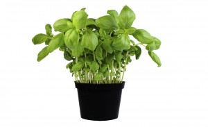 albahaca floristerias zaragoza