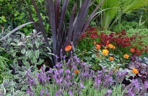 plantas aromaticas para tu jardin floristerias zaragoza