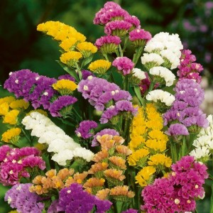 estatice floristerias zaragoza