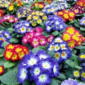 Flores en otono floristerias zaragoza