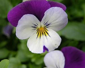 flores de invierno floristerias zaragoza