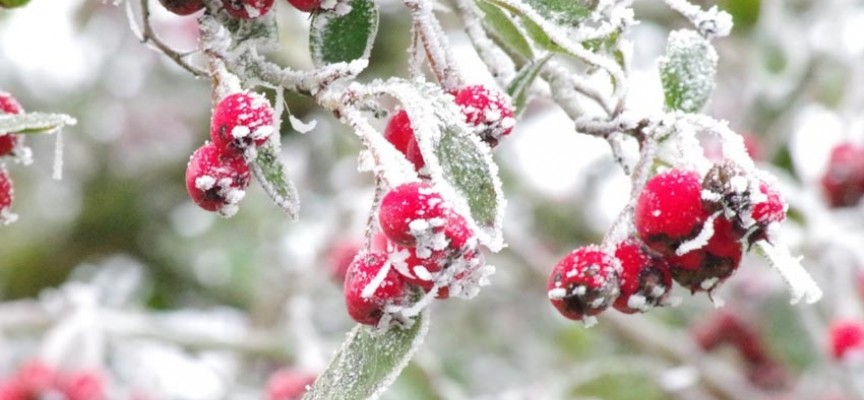 Protejer el jardin del frio floristerias zaragoza