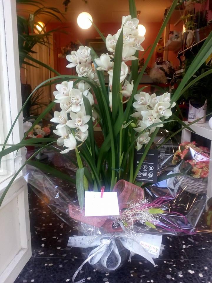 regalar flores en reyes floristerias zaragoza