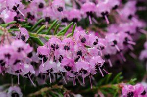 erica floristerias zaragoza