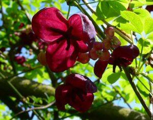 trepadoras para el jardin floristerias zaragoza