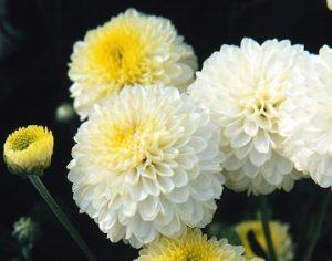 Flores para el dia de los Santos floristerias zaragoza