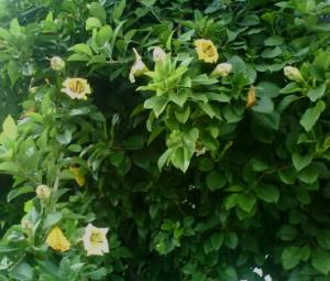 solandra floristerias zaragoza