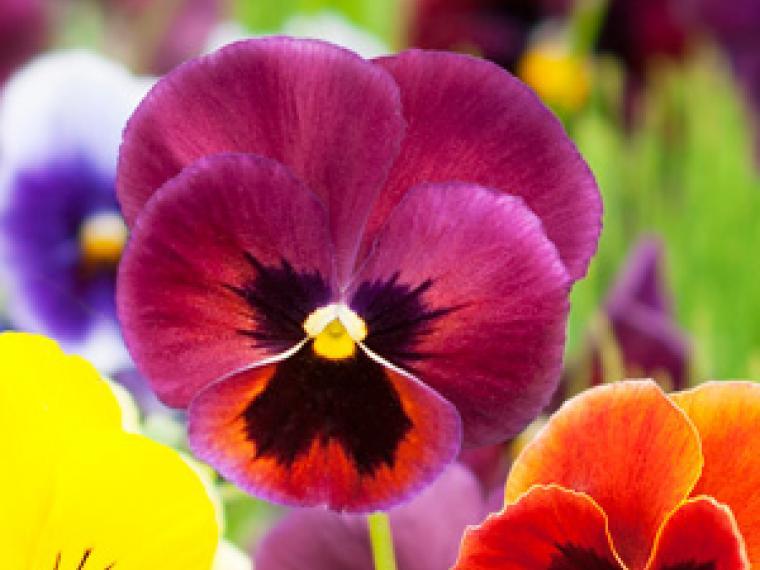 Plantas florales resistentes al frío floristerias zaragoza