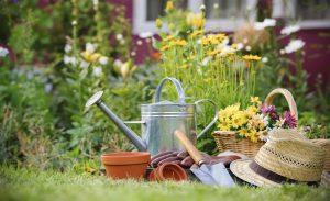 Cuidar el jardin en invierno floristerias zaragoza