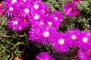 messem floristerias Zaragoza