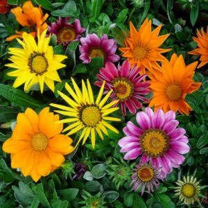 Plantas resistentes al sol floristerias zaragoza