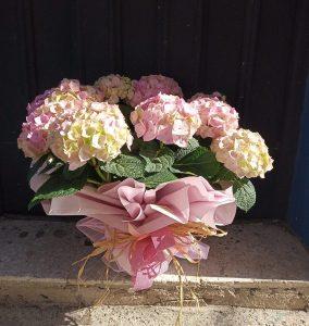 regalar hortensias floristerias zaragoza