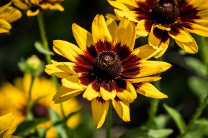 plantas de verano floristerias zaragoza