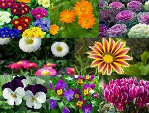 es una de las plantas de otoño e invierno más bonitas.