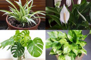Plantas que necesitan poca luz floristerias zaragoza