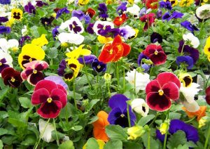 Plantas resistentes al frío floristerias zaragoza