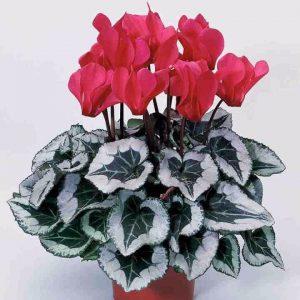 flores de interior para invierno Floristerias zaragoza