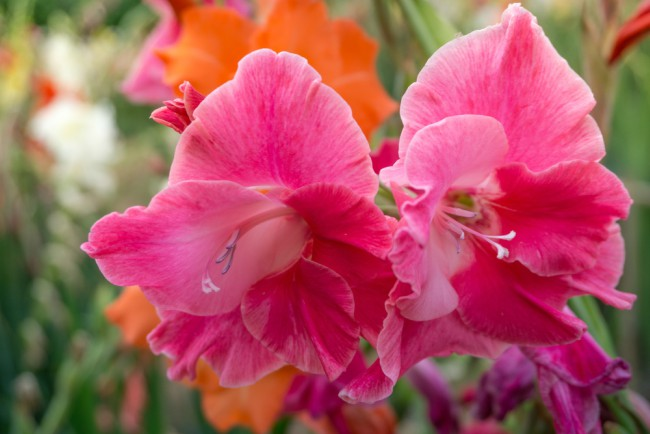 Bulbos de primavera floristerias zaragoza