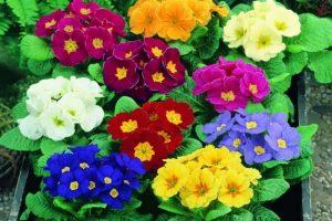 flores en Primavera floristerias zaragoza