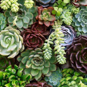 Cuidado de las suculentas floristerias zaragoza