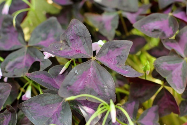 Planta mariposa Floristerias zaragoza