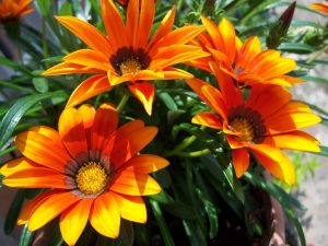 Plantas que florecen en verano Floristerias zaragoza