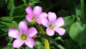 flor-de-oca floristerias zaragoza
